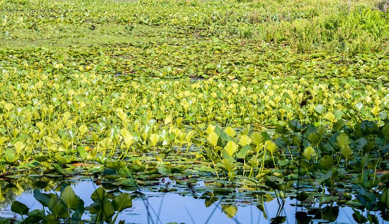Pipewort Pond Nature Preserve - July 4, 2017