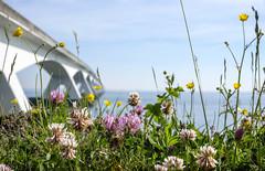 Flowers and the bridge