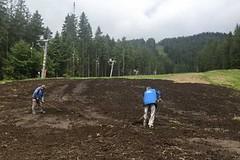 Na šumavském Špičáku revitalizují sjezdovky kompostem ze šumavských luk