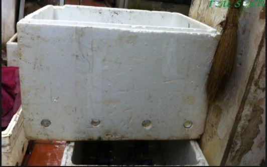 Kỹ thuật nuôi trùn quế trong thùng xốp và cách xây dựng mô hình
