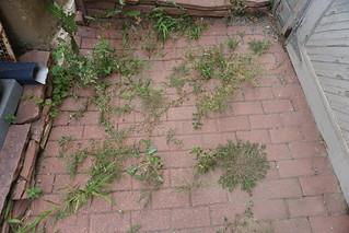 Weeds in the bricks