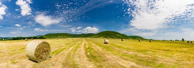 Agriculture landscape panorama