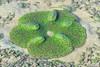 170617 - Carpet anemones