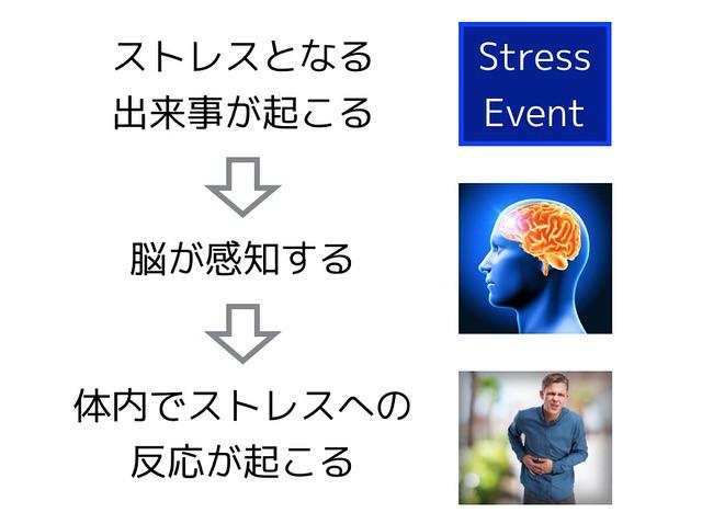 ストレス反応概観