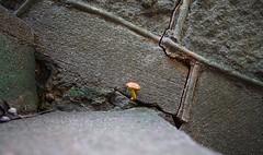 Mushroom on concrete #sustainatlanta #mushrooms #stairs #concrete #southern #beauty #explore #photography #georgia #atlanta #outdoors