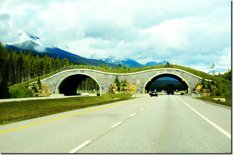 An animal bridge at Banff National Park in Alberta, Canada