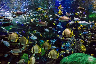 Rainbow Reef, Ripley's Aquarium