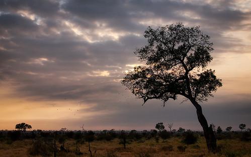 africanaturelandscapekruger parksunrise