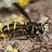 the Europe's Diptera group icon
