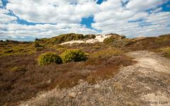 One of the Danish heathlands