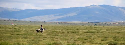 mongolia mongolian horse equine girl woman steppes asia livestock