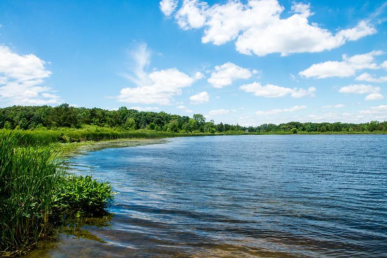 Marsh Lake - Crane Marsh Wetland Conservation Area - June 20, 2017
