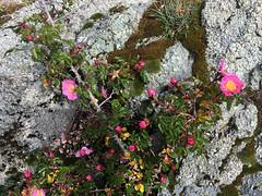 Corse Juin 2017_ (48 sur 99)