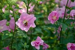 Flower 214