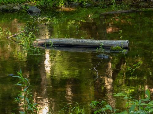 smack53 waywayandastatepark waywayanda vernon newjersey summer summertime statepark newjerseystatepark water stream brook canon powershot g12 canonpowershotg12 reflections
