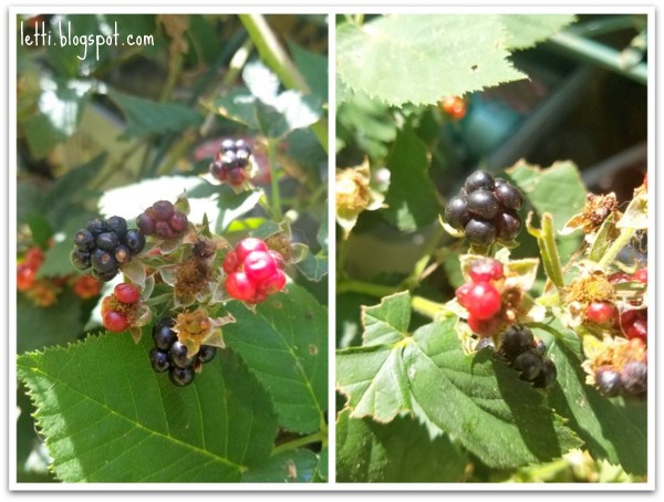 June 21 Blackberries-001