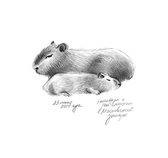 Capybara and her baby