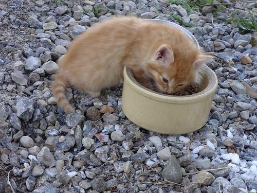 Waif Kittens 11-Jun-2017