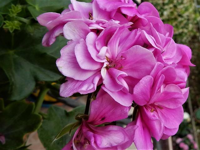Good morning...pink..........., Nikon COOLPIX S9700