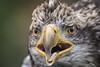 TRC Eagle 23