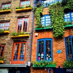 The Windows of Neal's Yard