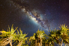 Milky Way over Palm Trees