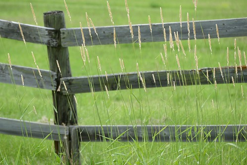fence-in-the-grass