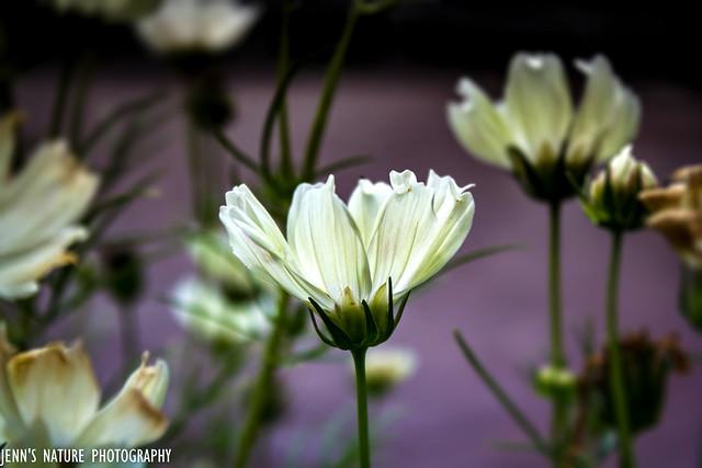 Illuminated White Flower