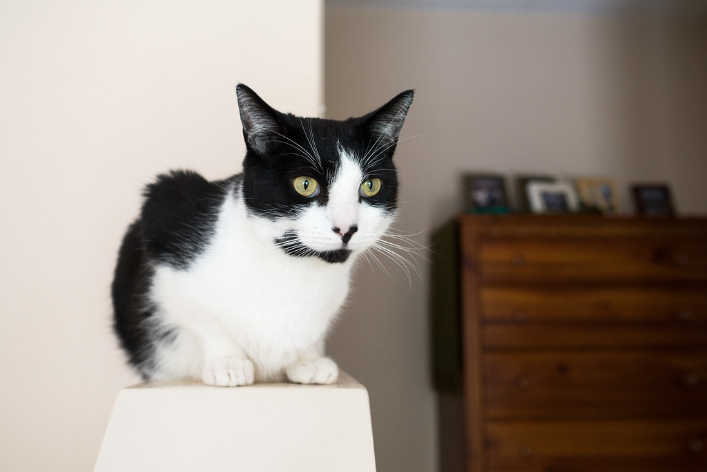 Our black-and-white cat Boo sits on a ledge