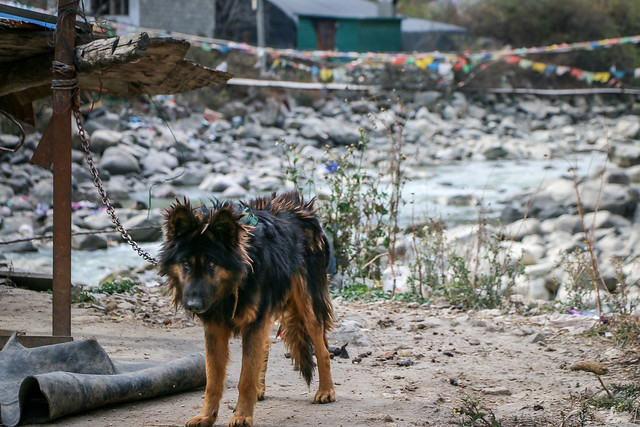 A dog in roadside rest area from Chengdu to kanding 成都から康定までのドライブインにいた犬