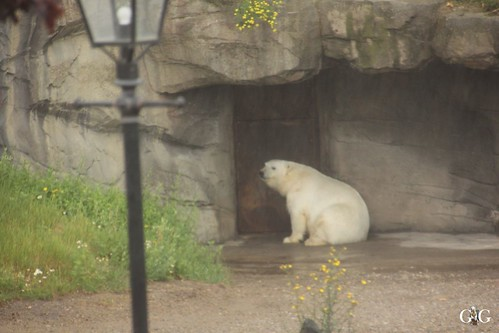Besuch Zoo Hannover 25.06.201742
