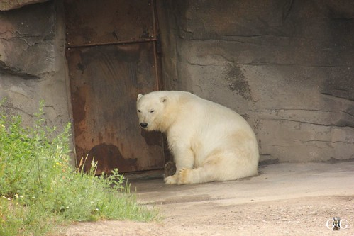 Besuch Zoo Hannover 24.06.201713