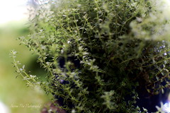 Thyme is of the Essence