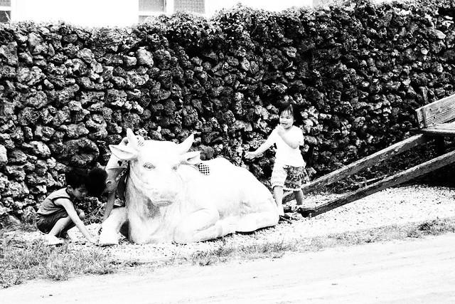 20170602拍攝於南寮042
