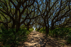 The Beach Road - Cumberland Island, GA