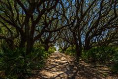 The Beach Road - Cumberland Island, GA