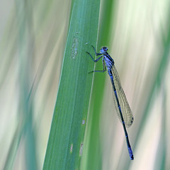 variablele waterjuffer