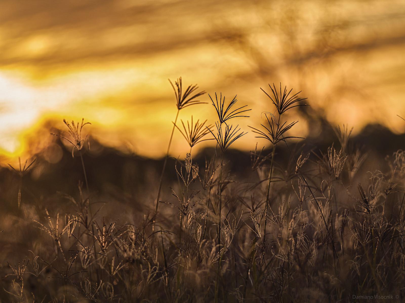grass on dusk