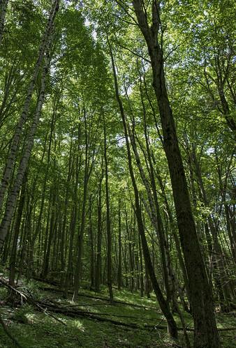 Rhine Center Bog State Natural Area