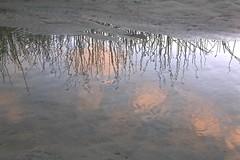 Reflection on the Carmel River Lagoon