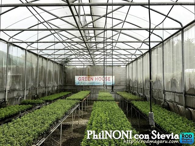 PHilnoni stevia011