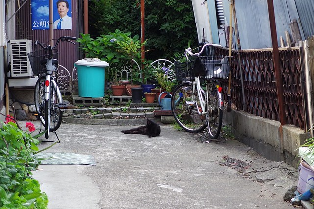 Today's Cat@2017-06-21