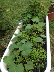 Jardin en pots 02