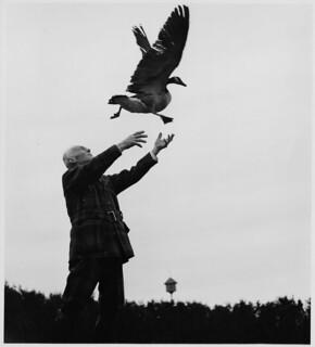 John Thomas Miner releasing a Canada Goose into the air / John Thomas Miner relâchant une bernache du Canada dans les airs