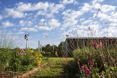 062617_GEOL rooftop garden_04