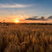 Sunset at Battisford
