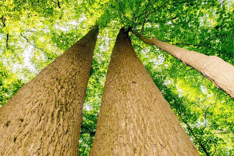 Bendix Woods Nature Preserve - July 4, 2017