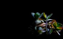 background, wallpaper, hintergrundbild (free)