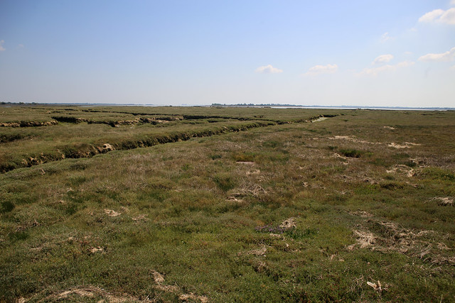 Marshes on Northey Island