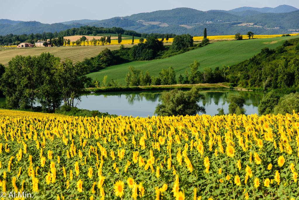 Lago di Galliano | Paesaggio bucolico con girasoli Bucolic l ...